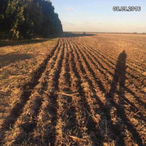 Высев озимой пшеницы в сухую в верхних слоях почву посевным комплексом Мzuri