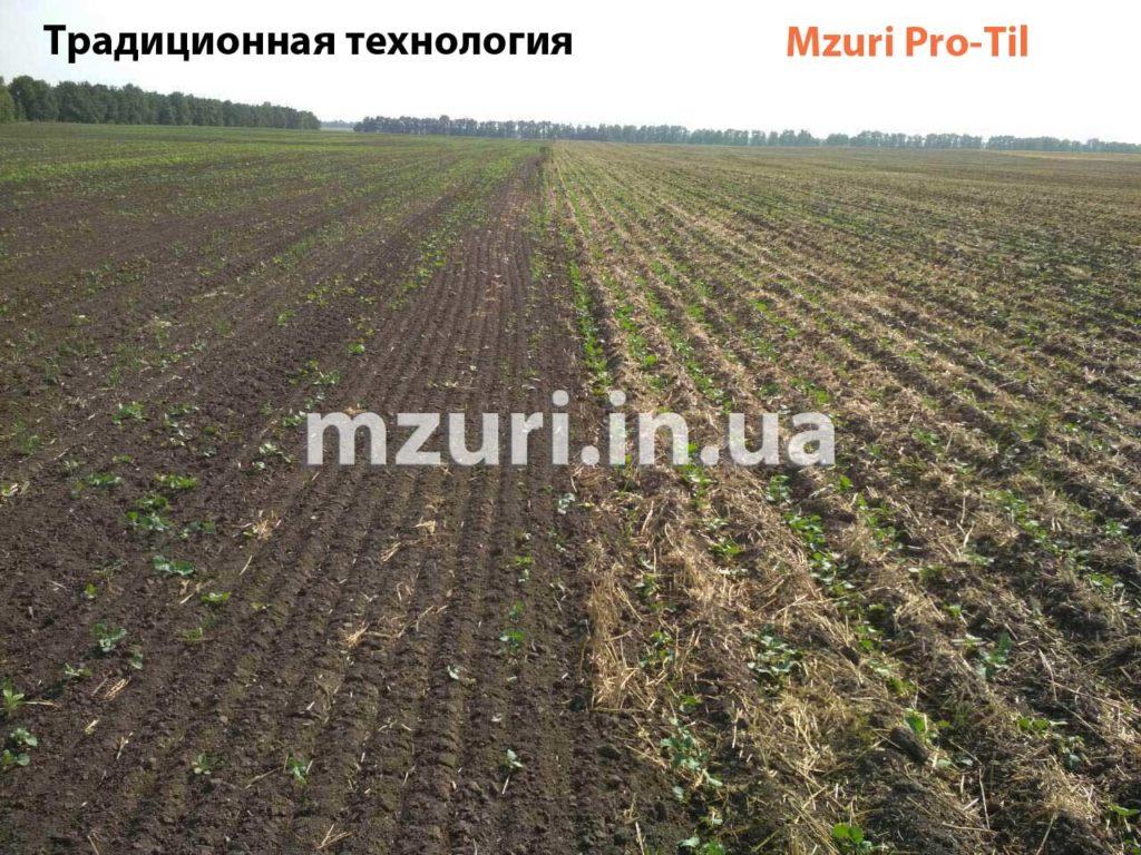 Сравнение посевов рапса по традиционной технологии и Стрип-Тил от Мзури Про-Тил