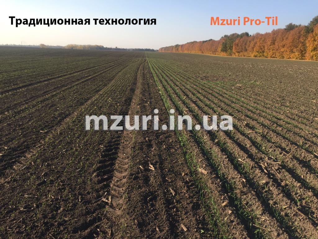 Сравнение всходов озимой пшеницы, посеянной по технологии Стриптил от Мзури Про-Тил и традиционной классической технологии.